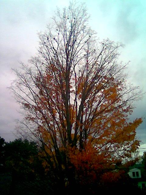 Fall Into Winter