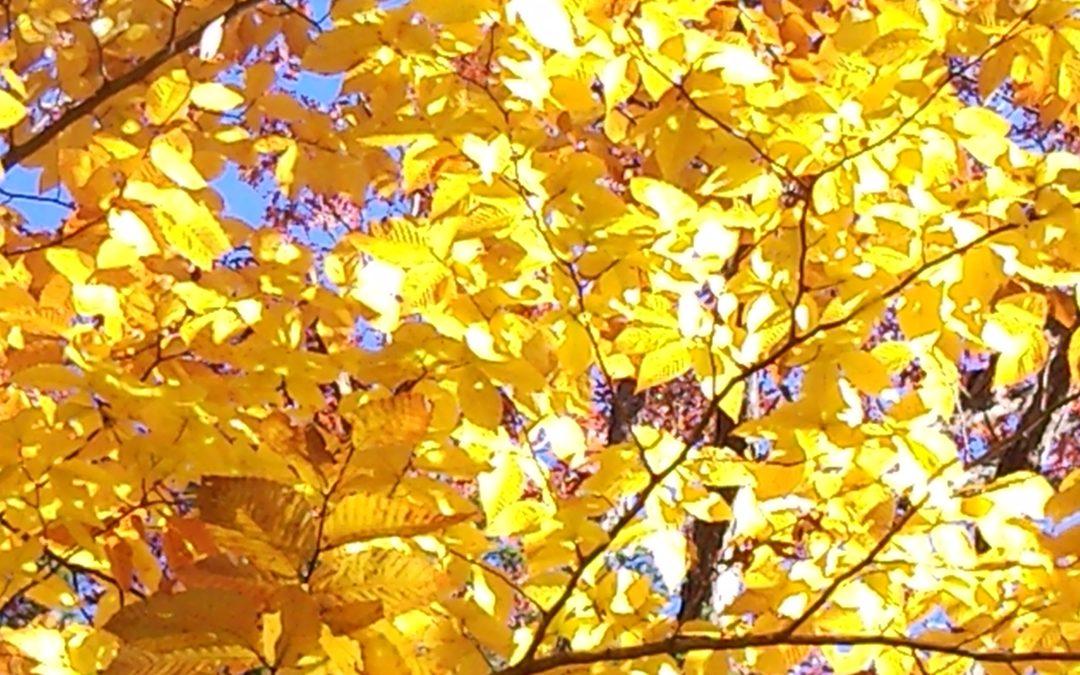 Gorgeous Fall Photos