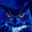 Owl Totem Identification Resource