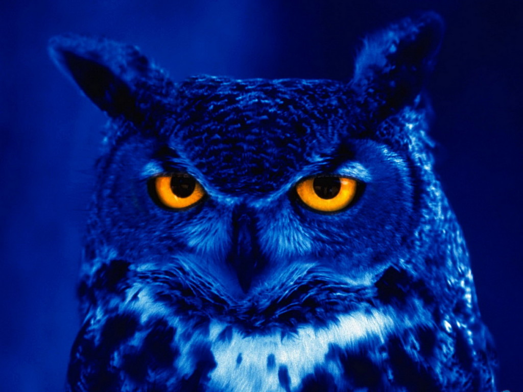 Owl Totem Identification Resource