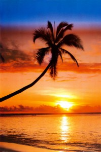 palm at sunset tropical island photo for stress relief audio guided meditation visualization