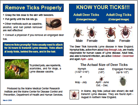 Tick Identification Wallet Card