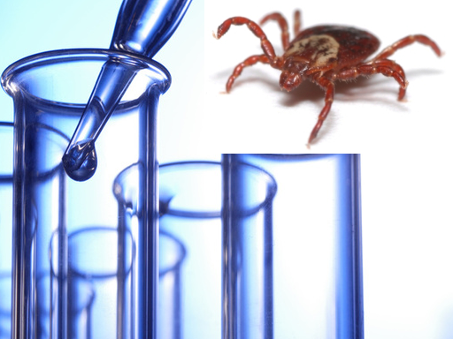 The Right Lyme Disease Test